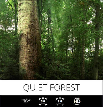 tonsturm quiet forest