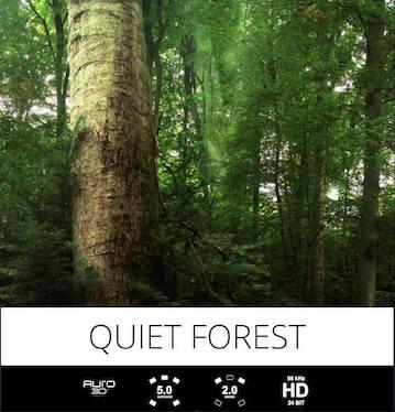 tonsturm quiet forest