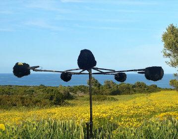 tonsturm mediterranean nature